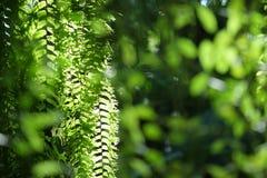 Много расклассифицированный завод speciesFern, мох, мох Sphagnum на верхушке Стоковая Фотография