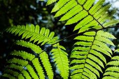 Много расклассифицированный завод speciesFern, мох, мох Sphagnum на верхушке Стоковые Фотографии RF