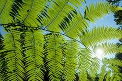 Много расклассифицированный завод speciesFern, мох, мох Sphagnum на верхушке Стоковое Изображение