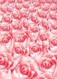 Много розовых роз, текстура цветков, космос экземпляра стоковые изображения