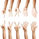 Много рук подсчитывая от одно к 5 Стоковая Фотография