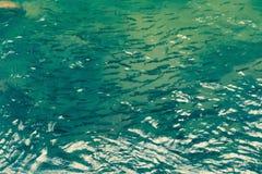 Много рыбы в пруде Стоковые Фотографии RF