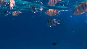 Много рыб на коралле акции видеоматериалы