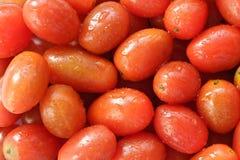 Много свежие томаты Стоковые Изображения