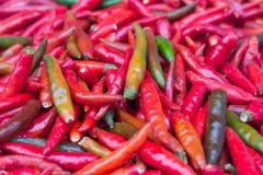 Много свежий chili для варить Стоковые Изображения RF