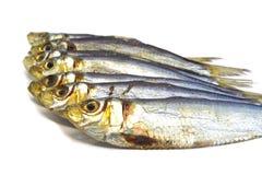 Много свежих высушенных рыб Стоковая Фотография