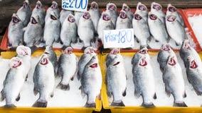 Много свежих рыб стоковая фотография rf