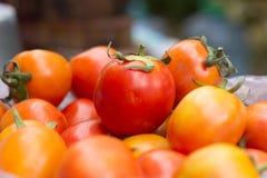 Много свежих томатов для варить Стоковое фото RF