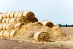 Много связок соломы на поле стерни после сбора вал времени земной хлебоуборки сада яблока возмужалый Стоковые Фото