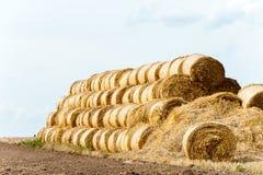 Много связок соломы на поле стерни после сбора вал времени земной хлебоуборки сада яблока возмужалый Стоковое Изображение RF
