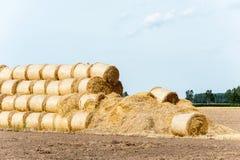 Много связок соломы на поле стерни после сбора вал времени земной хлебоуборки сада яблока возмужалый Стоковое фото RF