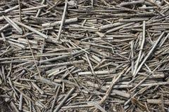 Много серый цвет и испещрянные сухие черенок тросточки Стоковое фото RF