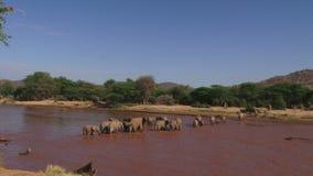 Много слонов пересекая реку сток-видео
