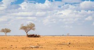 Много слоны стоя под большим деревом, на сафари стоковые изображения rf