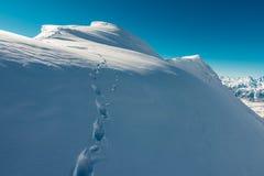 Много следов ноги на холме снега Стоковые Фотографии RF