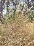 Много трава золота Стоковое фото RF