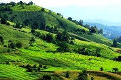 Много хата фермера на высокой горе с ield риса Стоковое Изображение RF