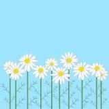 Много цветков стоцвета на голубой предпосылке иллюстрация вектора