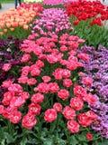 Много цветков тюльпана, вертикальных Стоковая Фотография
