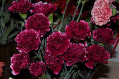 Много цветков Стоковое Изображение