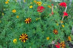 Много цветков Стоковые Изображения RF