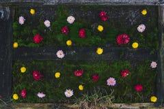 Много цветов цветков на зеленом мхе Розовые, красные и желтые бутоны цветков стоковая фотография rf