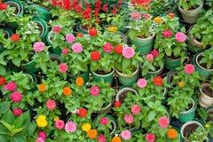 Много цветут заводы в баках Стоковое Изображение