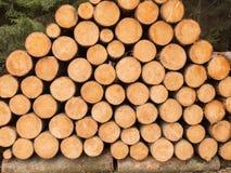 Много штабелированных деревянных хоботов Стоковое Фото