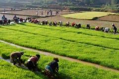 Много люди работая в полях Стоковые Фото
