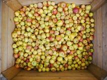 Много яблок в деревянных коробках Стоковые Фотографии RF