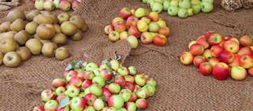 Много яблок много печатают внутри осень Стоковое Фото