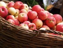 Много яблок Стоковое фото RF