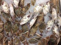 Много crab замерзаются Стоковое Изображение RF