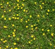 Много field крупный план цветков Стоковые Изображения