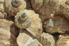 Много seashells как предпосылка, конец вверх стоковое фото rf