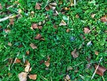 Много shamrocks в парке стоковое изображение rf