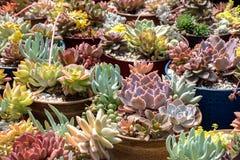 Множественные заводы кактуса в баках стоковая фотография