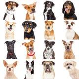 Множественные крупные планы собаки Crossbreed Стоковая Фотография