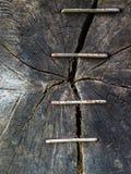 Множественные струбцины Стоковые Фото