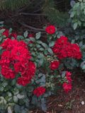 Множественные цветки Стоковые Фотографии RF