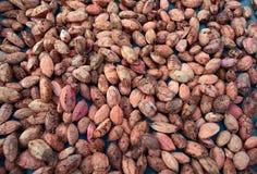 Множество грецких орехов Сырцовая текстура еды Чокнутая предпосылка текстуры Стоковое Фото