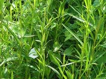 Множество зеленой травы стоковые изображения