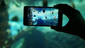 Мобильное устройство снимает аквариум с разнообразием различных рыб на конце-вверх видеокамеры акции видеоматериалы