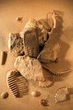 Мобильный телефон в песке стоковое фото