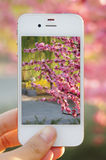 Мобильный телефон, камера Стоковое Изображение RF