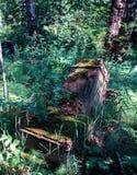Могильный камень в еврейском кладбище Стоковое фото RF