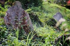 Могильный камень - еврейское кладбище Dolni Kounice, чехия Стоковая Фотография
