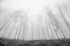 Могущественные деревья Стоковые Изображения RF