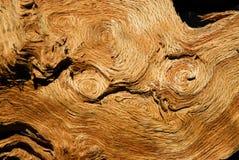 Могущественный дуб против gravity Стоковая Фотография