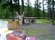 Могу я присоединиться к вам для пикника? стоковая фотография